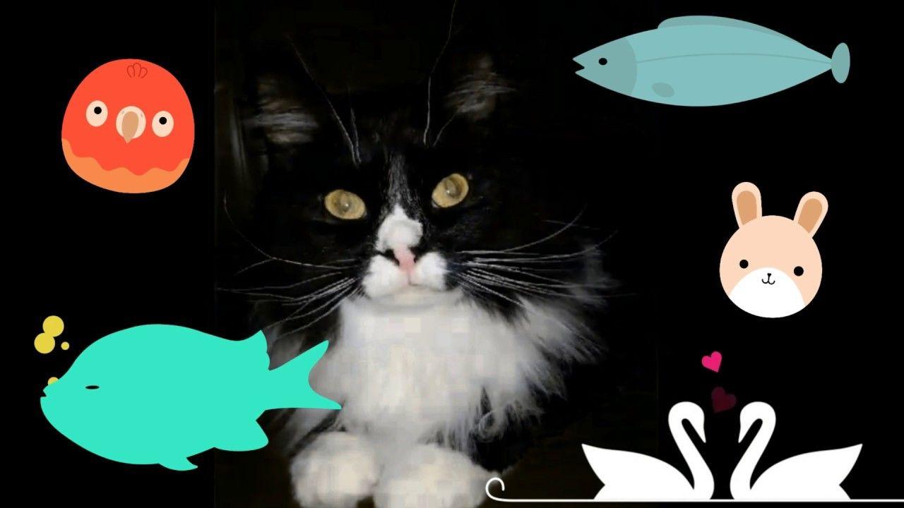 Funny Cat Video Cat Won t Eat the New Pet Demands Payments