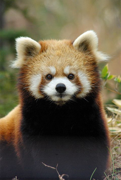 Can I help you? - Imgur | so precious | Pinterest | Red ...