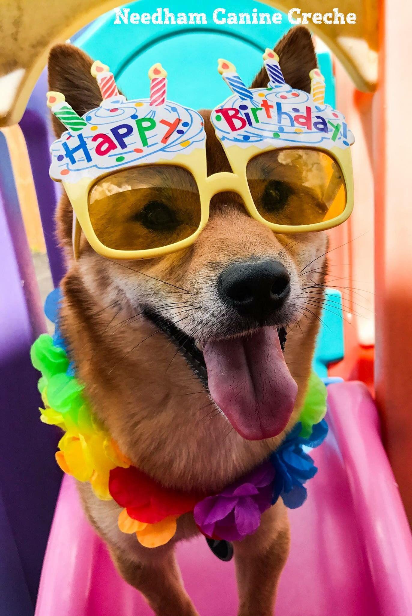 14 Dog Birthday Cake  Cupcake Homemade Recipes Playbarkrun
