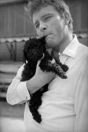 Richard Burton with his Poodle friend on the set of Becket 1963 do you remember the actress that Burton married??? and in what movie they met???