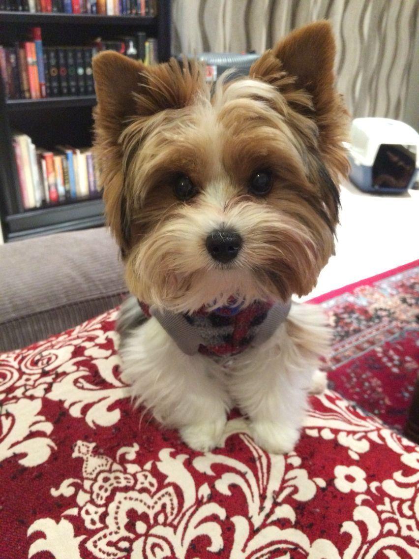 Pin On Love My Doggies