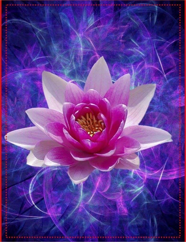 Pin by Angel Seeker on LOTUS FLOWER Flowers, Pink lotus