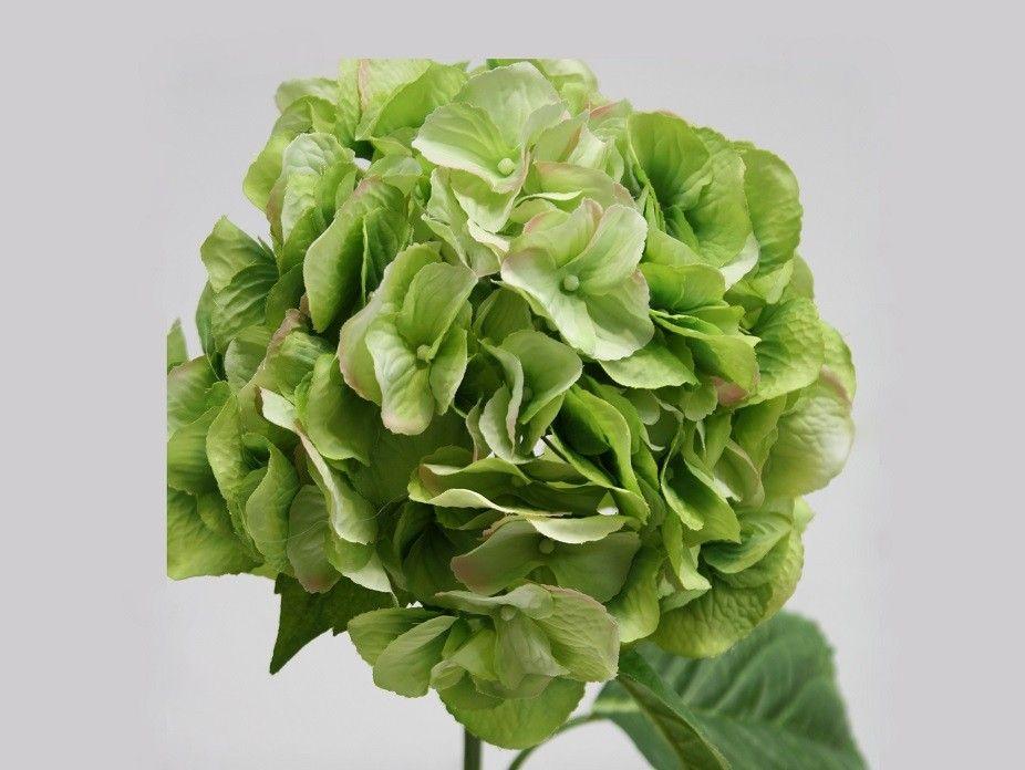 Hydrangea Macrophylla Green   Harvey Furnishings