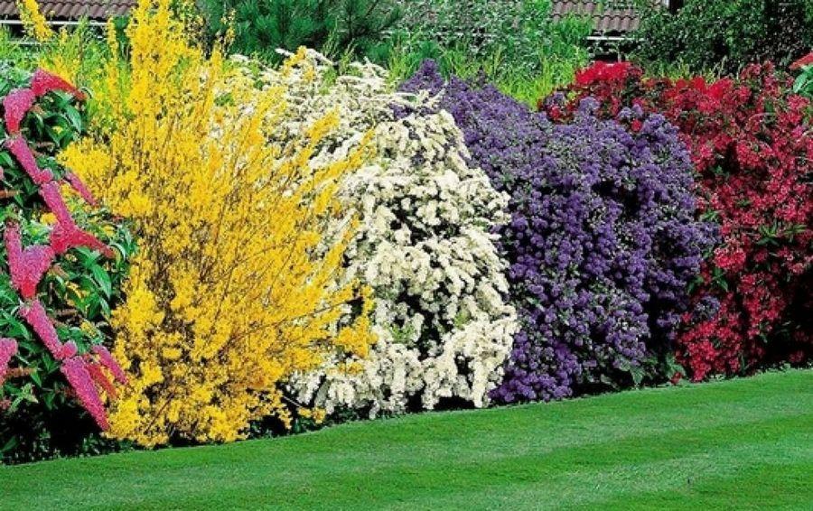 Te gustan los arbustos de esta fotografía? ¡Descubre cuáles son