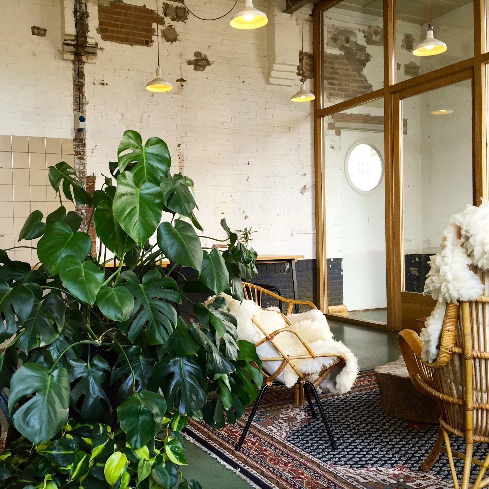 Interior - home - monstra plant