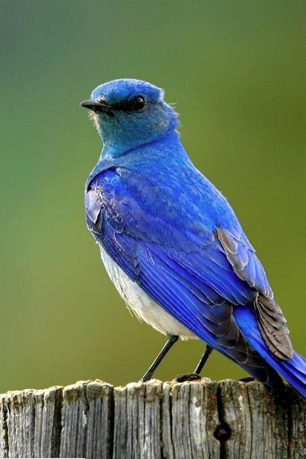 Beautiful Blue Bird Beautiful Bird Wallpaper Wild Birds Photography Birds Wallpaper Hd