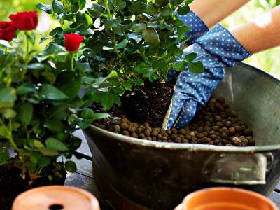 Keramzyt Wlasciwosci Zastosowanie W Ogrodnictwie Plants
