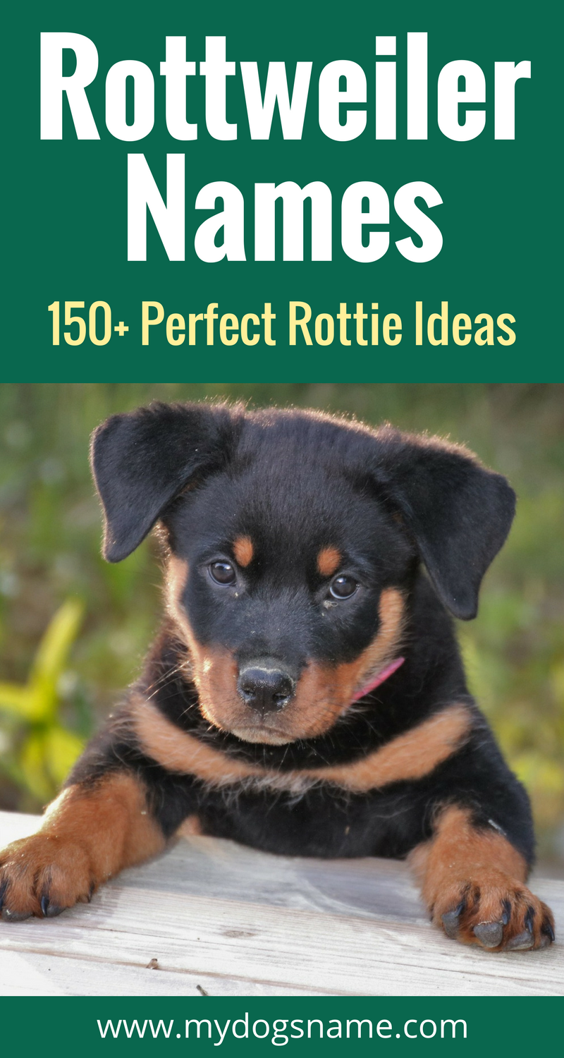 Rottweiler Names Get 150 Ideas My Dog S Name Rottweiler Names Strong Dog Names Dog Names