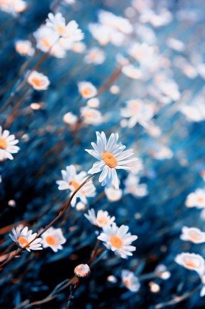 image via we heart it #background #blue #flowers #nature #pretty
