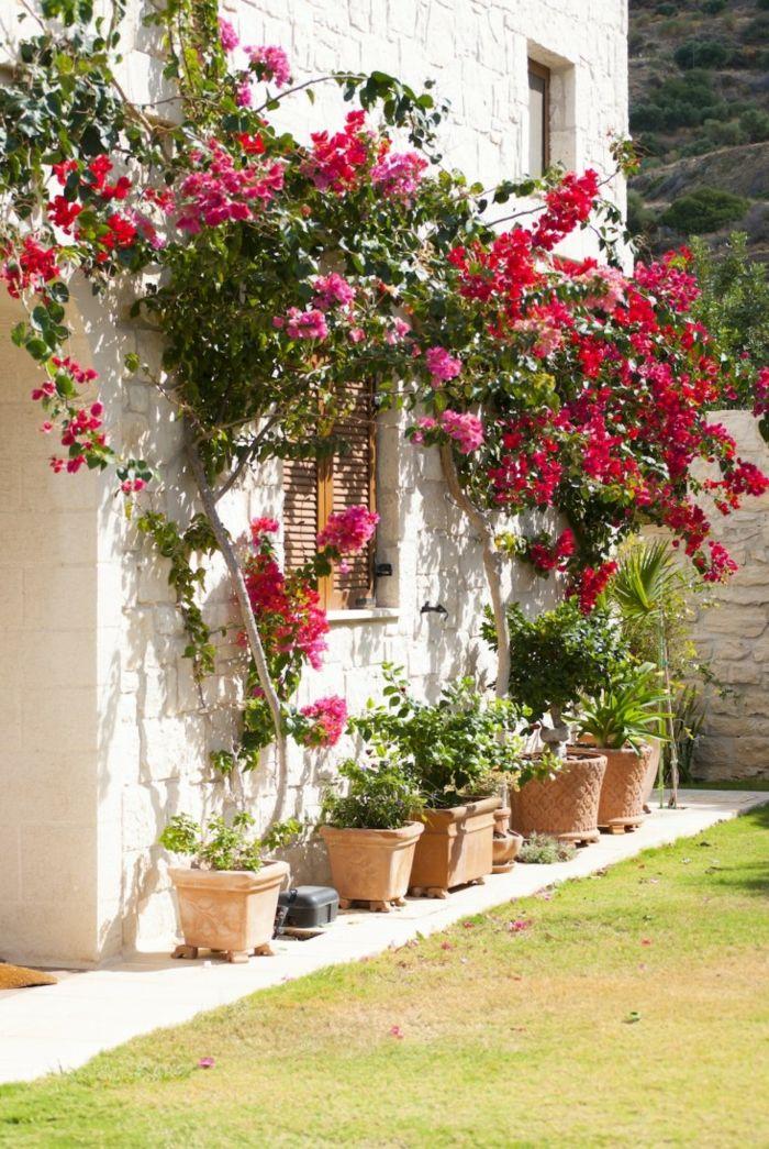 1001 ideas sobre c mo decorar un jard n peque o - Arbusto pequeno con flores ...