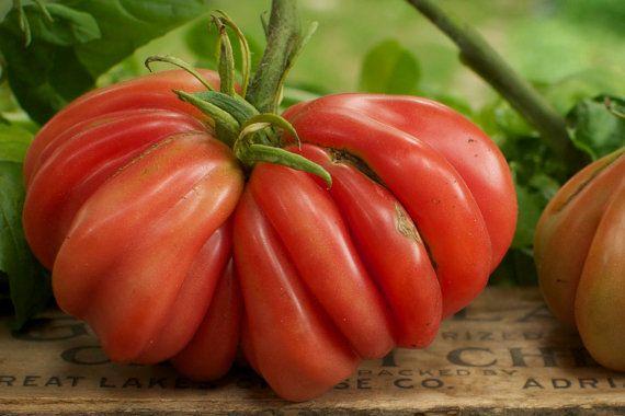 Organic Zapotec Pleated Tomato Started In My Aerogarden 400 x 300