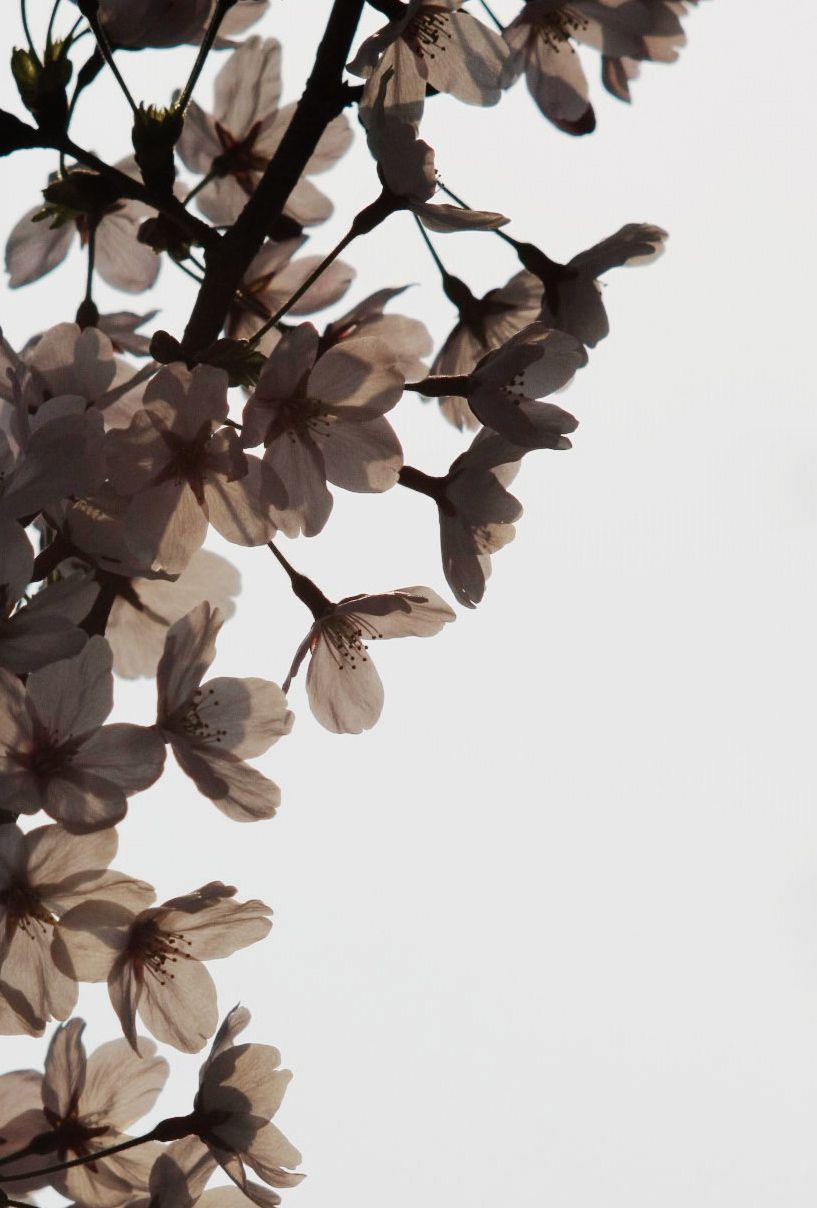 ScarfLove | Tatoo | Dark flowers, Flowers et Beautiful flowers