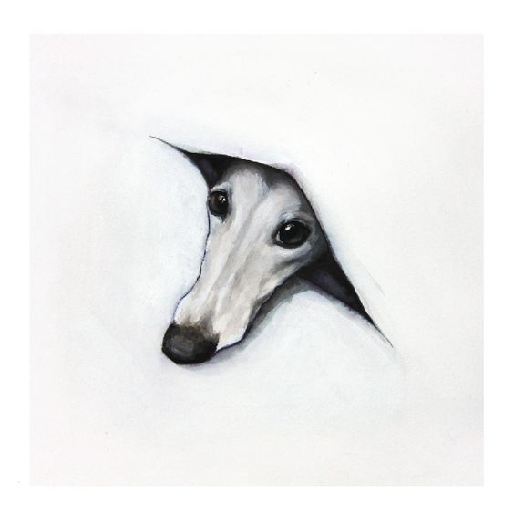 Peeping Whippet By Sarah Henderson Fine Art Print Arte De