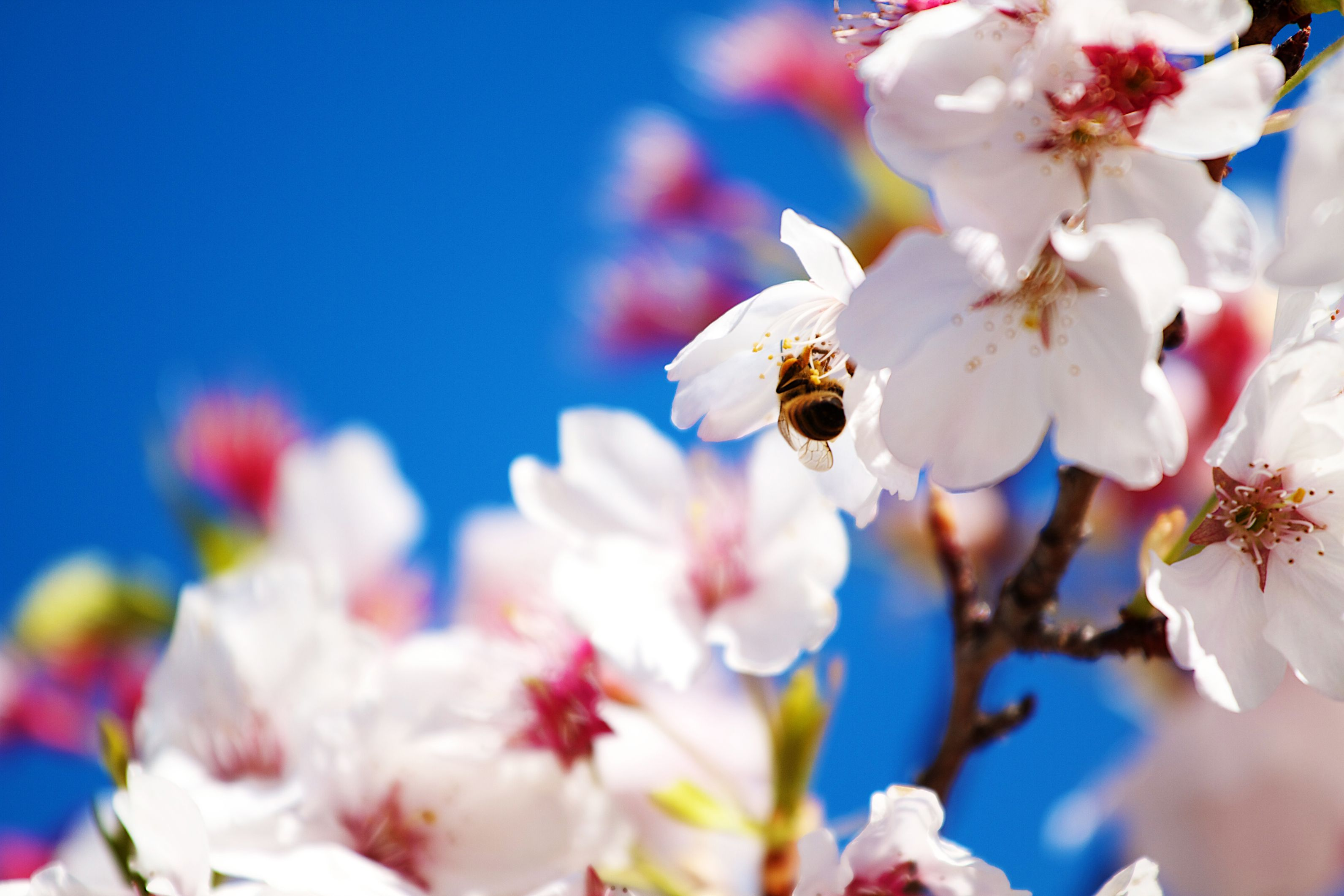 Spring Nature Scenes Spring Flowers Wallpaper Free Spring Wallpaper Spring Screensavers