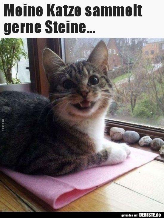 Meine Katze sammelt gerne Steine ... | Lustige Bilder, Sprüche, Witze, echt Geilheit ... - Kelly Blog #funnykittens