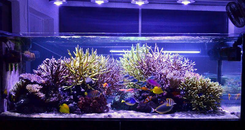 Reef Aquarium Orphek LED light & Reef Aquarium Orphek LED light | acuarios | Pinterest | Aquariums ... azcodes.com