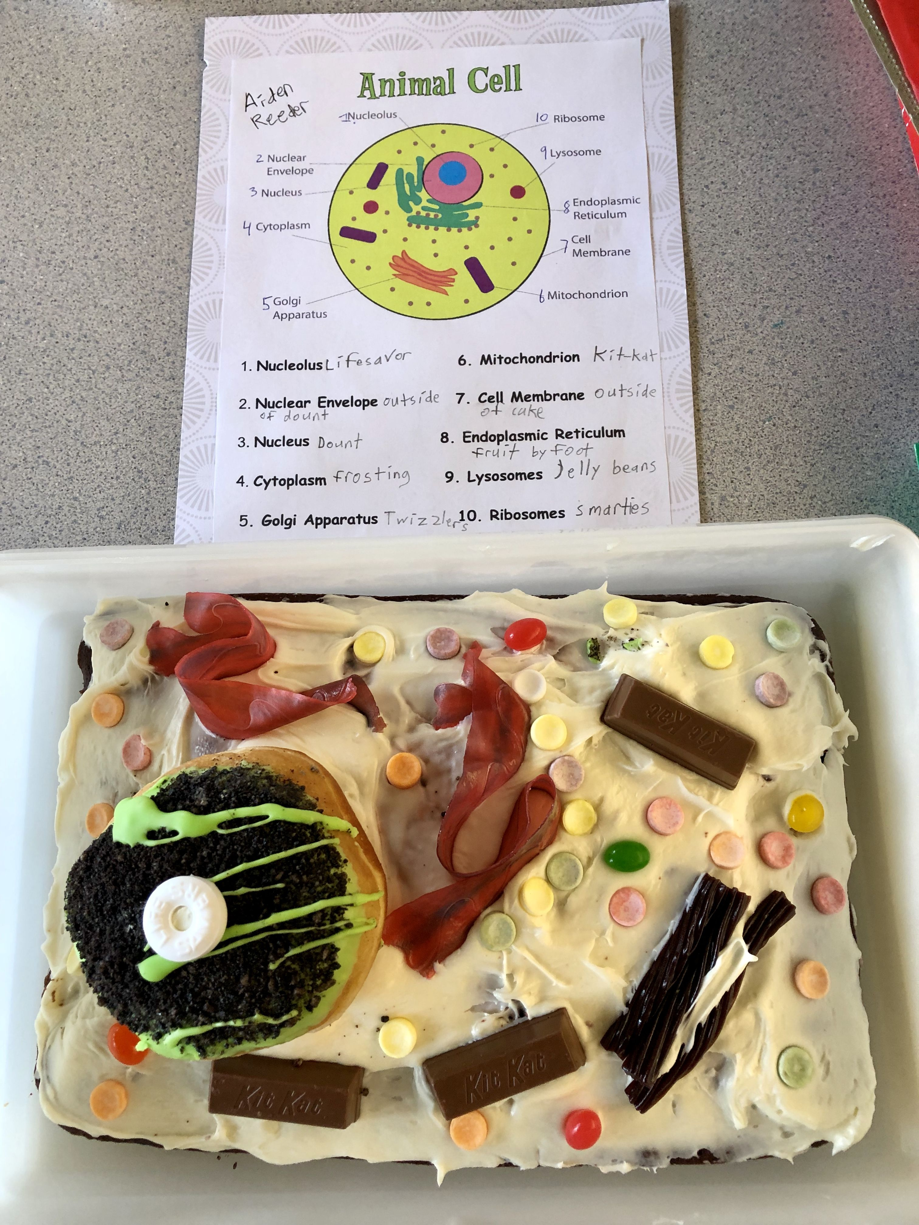 Pin By Donell Cornell On Edible Cell Projects