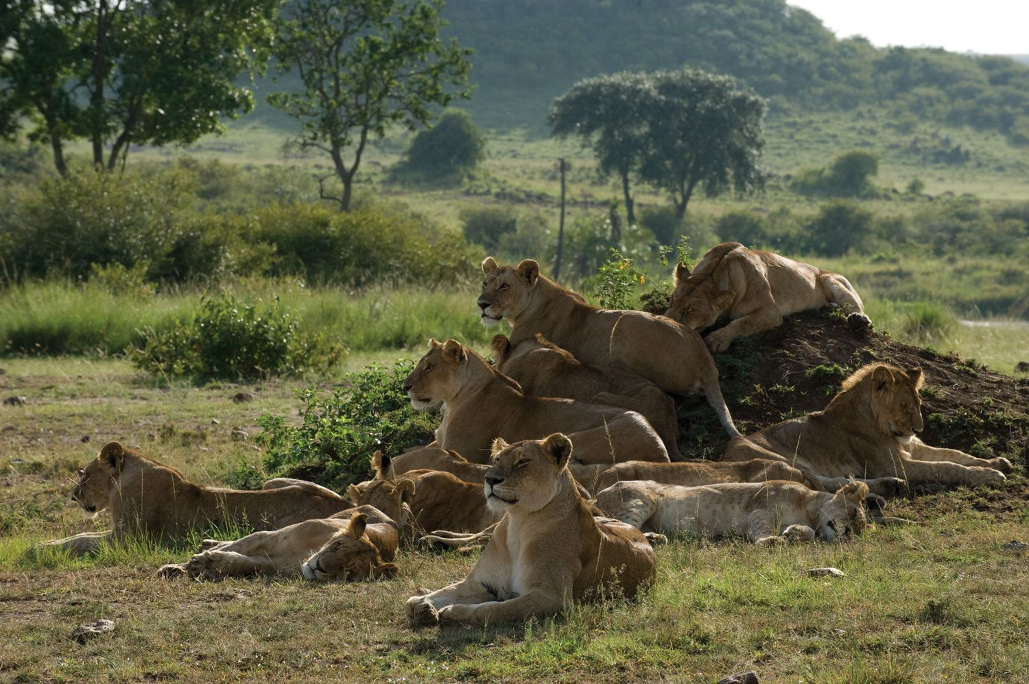 African Cats, DisneyNature African cats, Cat movie