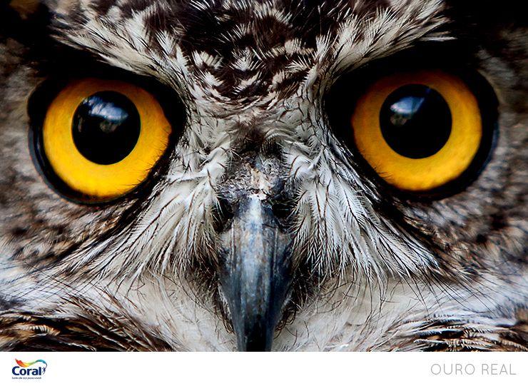 O olhar amarelo fascinante.