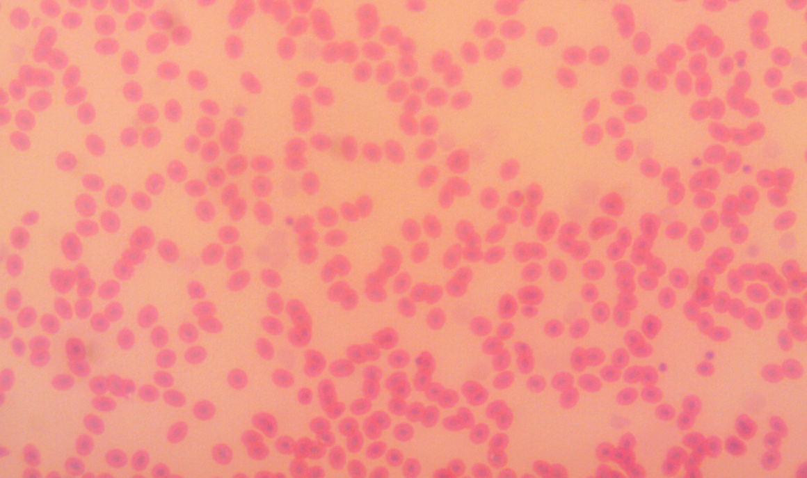 Pin On Microscopy