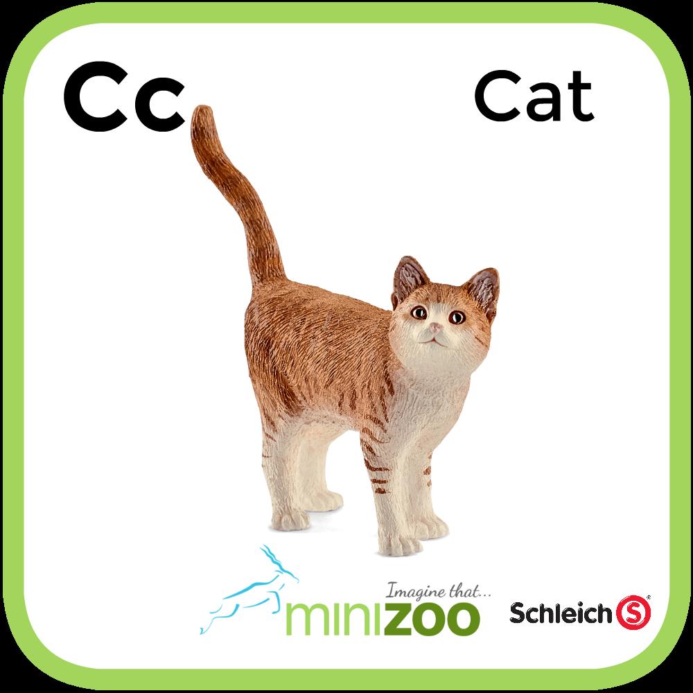 AZ MiniZoo Flash Cards Cats, Orange tabby cats, World cat