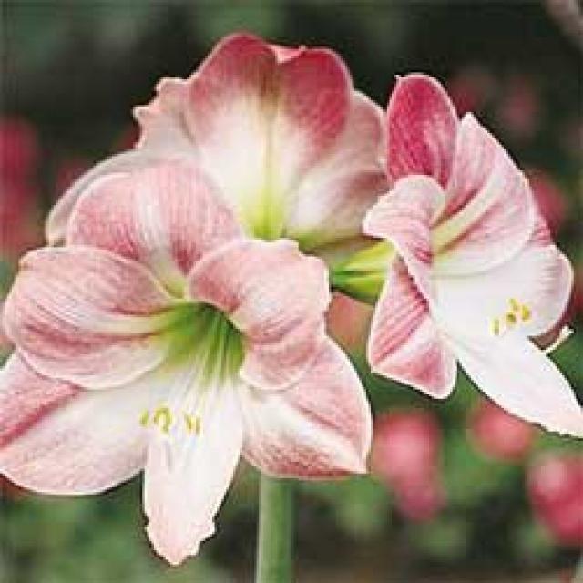 Ranking de Plantas con floración invernal - Listas en 20minutos.es ...