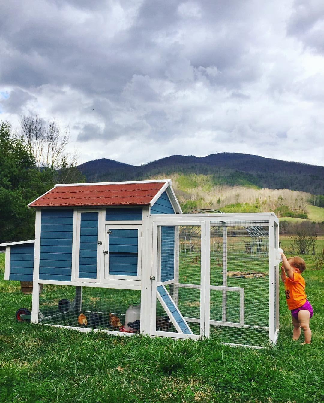 """✨Beryl ✨Kenny ✨Everett ✨Stella on Instagram: """"We're all loving our new mobile chicken coop from @tractorsupply  The chicks immediately started eating grass and looking for worms!  #backyardchickens"""""""