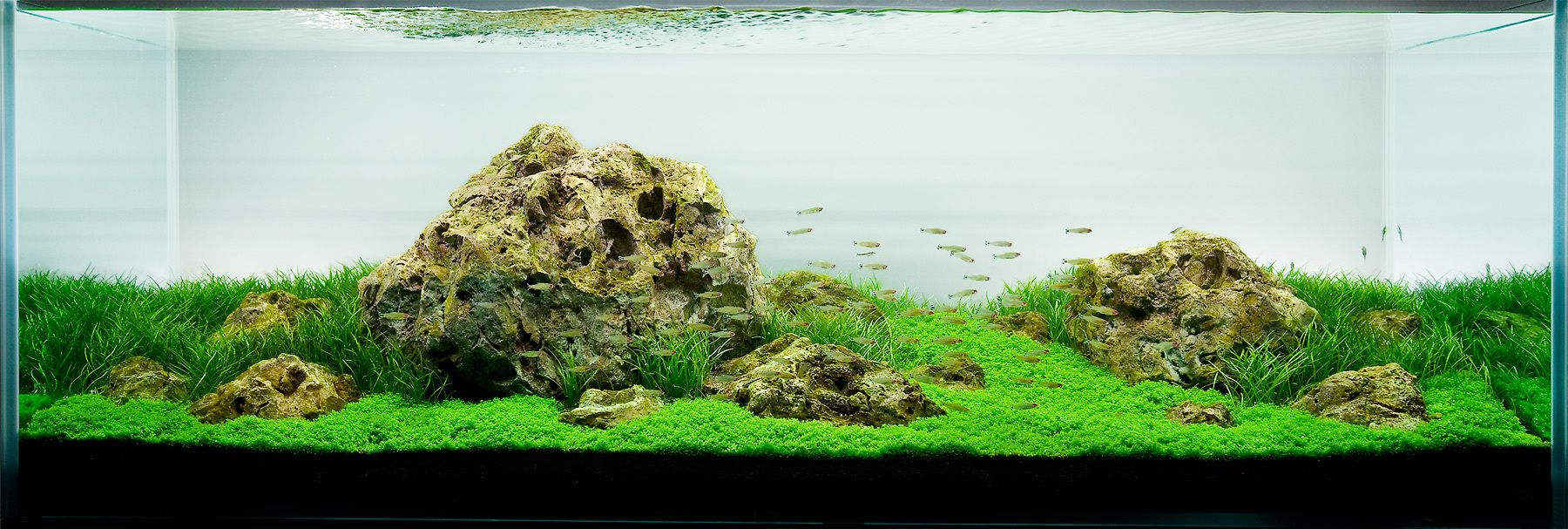Dragon Stone Aquascape Aquascaping Planted Tanks Aquariums