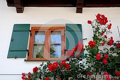 Photo made at Oberammergau in Bavaria (Germany). In the picture you can see a beautiful plant red roses that is the setting for a window with the dark green with the white curtains open and collected on the windows closed.