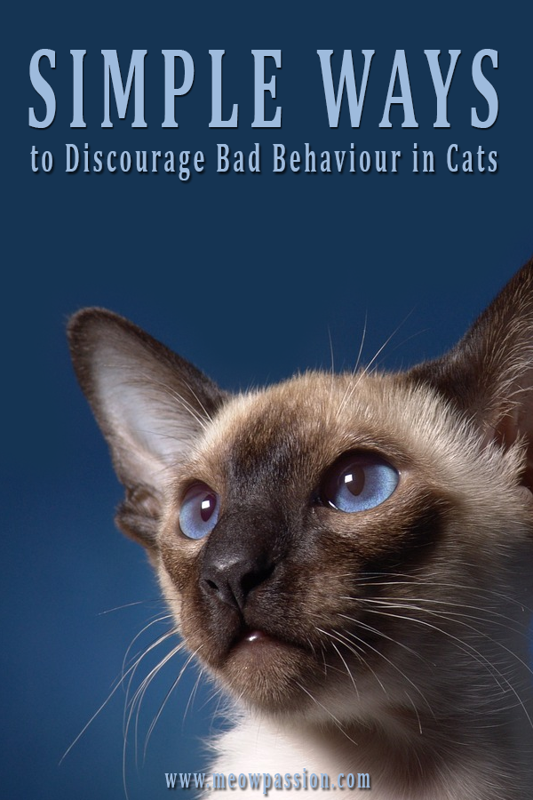 How To Train A Cat Tips And Rewards In 2020 Cat Behavior Cat Parenting Raising Kittens