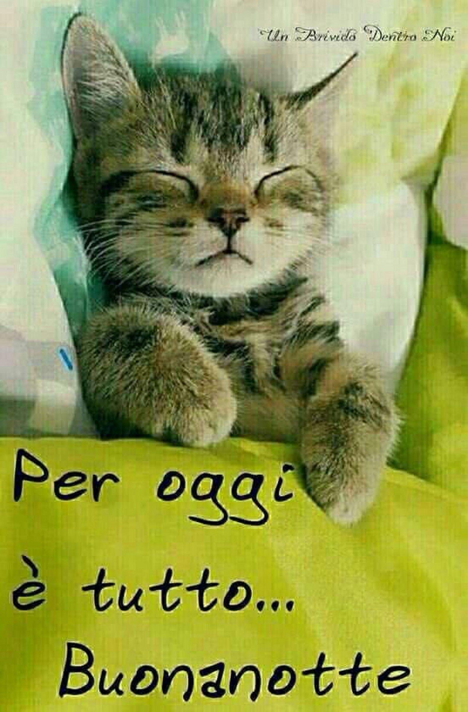 Micio Notte Margherite Buonanotte Adorabili Gattini E