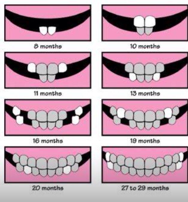 Baby teeth growth chart in  way that makes sense also development rh pinterest