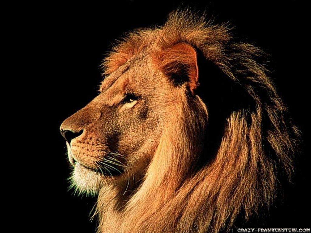 Lion pack tattoo