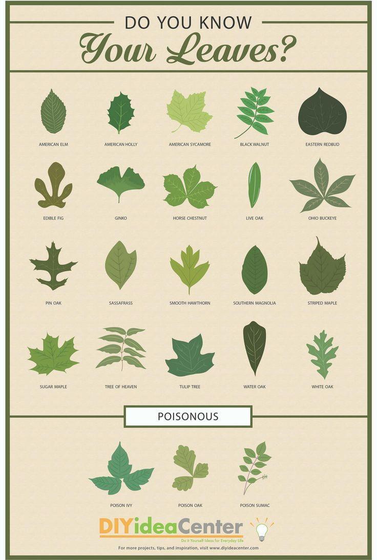 Leaf Identification Guide Infographic Leaf Identification Tree Leaf Identification Plant Identification
