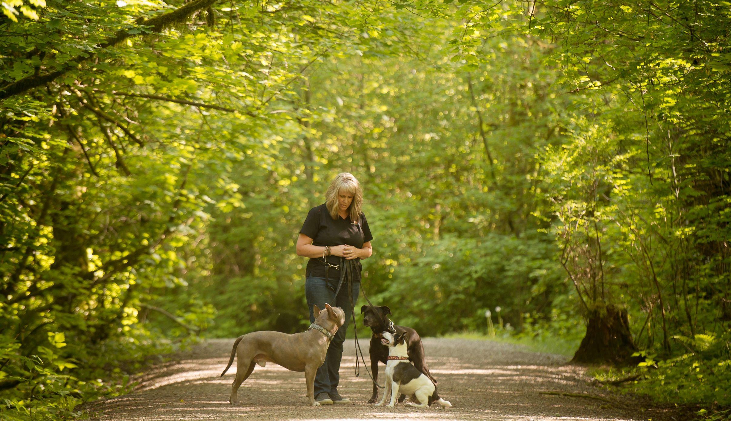 Dizine Canine Jpg Dog Training Canine Dogs
