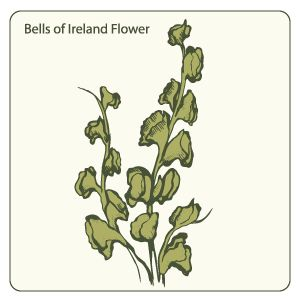 Bells Of Ireland Flower Download Free Vector Clipart Ireland Tattoo Flower Download Free Vector Clipart