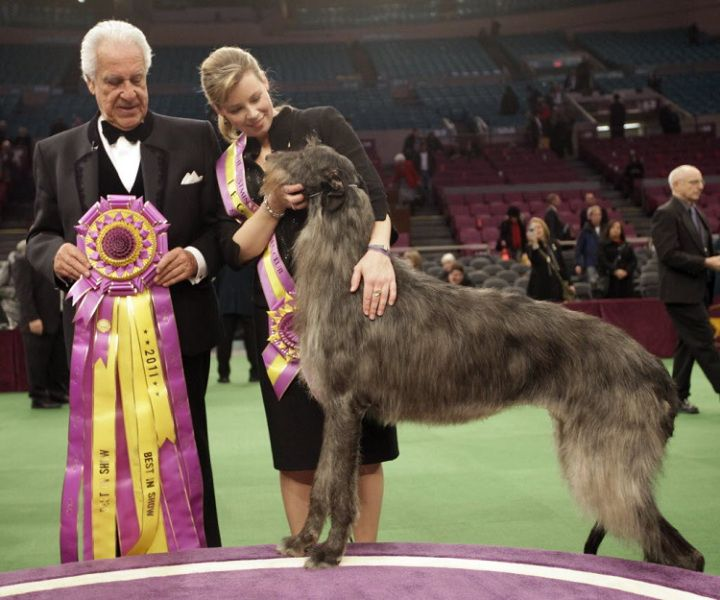 Tallest Dogs In The World Only For Dog Lovers Westminster Dog