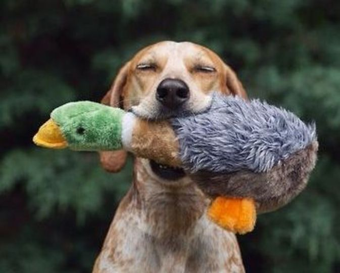 PetsLady's Pick: Funny Hunting Dog Of The Day  ... see more at PetsLady.com ... The FUN site for Animal Lovers
