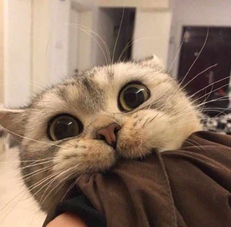 Pin Von Anna Auf Tiere Tiere Susseste Haustiere Baby Katzen