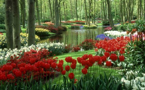 Nature Images Hd With Colorful Tulips Garden Beautiful Flowers Garden Beautiful Gardens Beautiful Nature Wallpaper