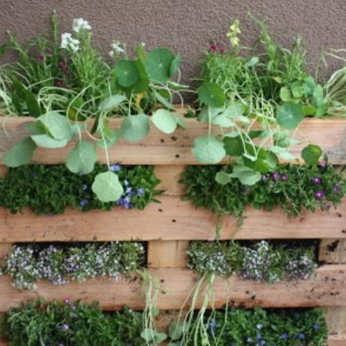 Gardening Classes Chicago Indoor Herb Gardening Dabble Pallet Garden Vertical Pallet Garden Plants