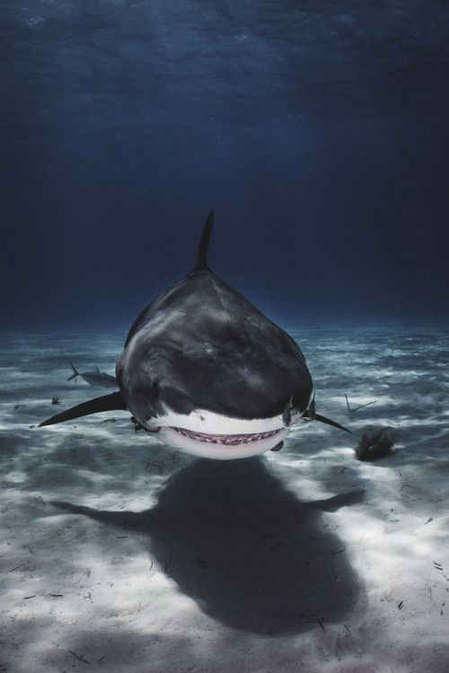 bruxa da água, envyavenue: Shark Week