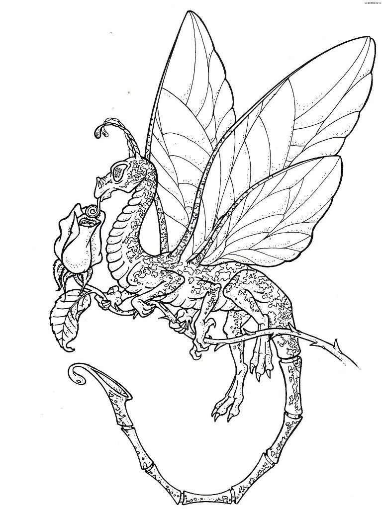 Coloring Pages Licious Dragon For Adults Free Of Dragons Printable Realistic