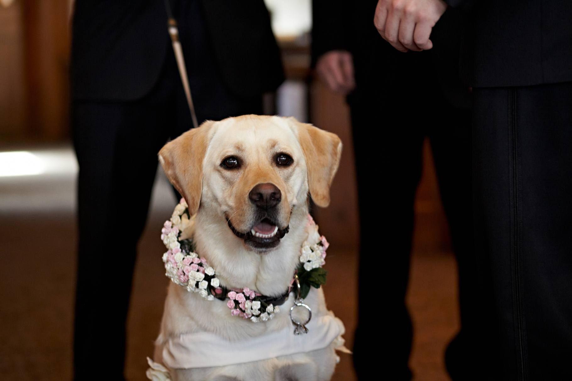 Dogs in weddings dog ring bearer dog flower girl dog walks