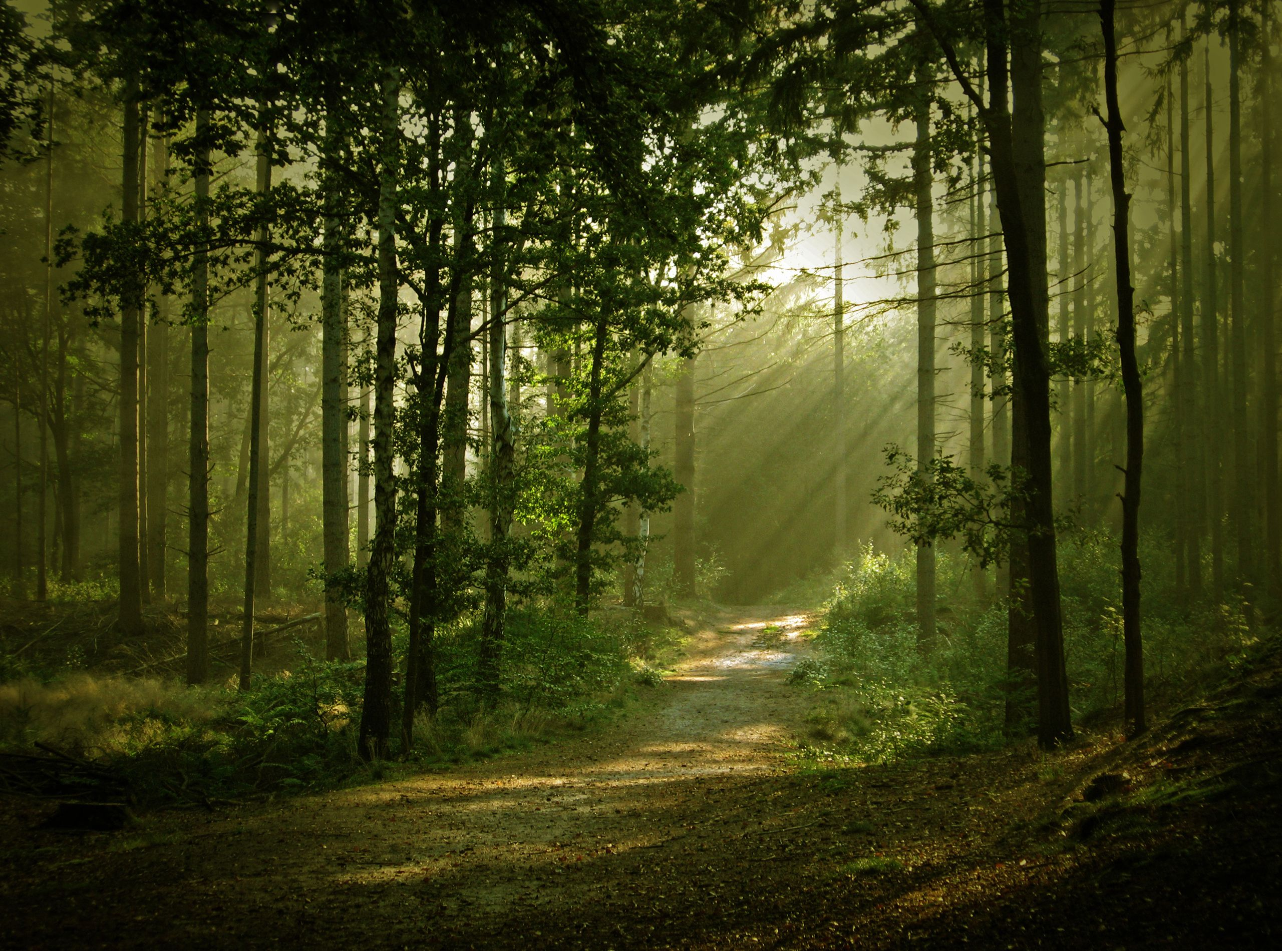 17 best images about forest on pinterest trees wallpapers and