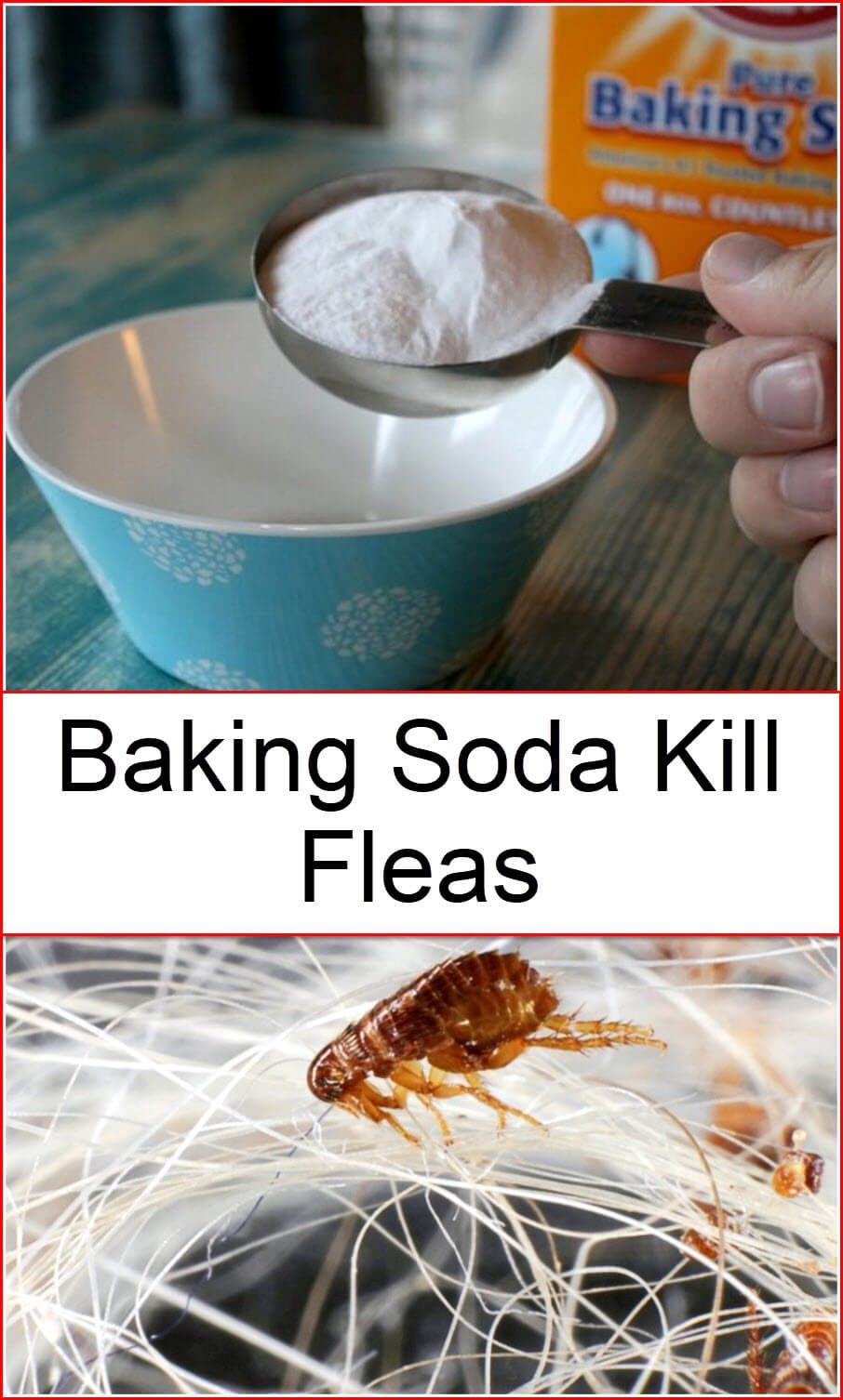 Baking Soda Kill Fleas Flea Remedies Dog Flea Remedies Baking Soda Uses