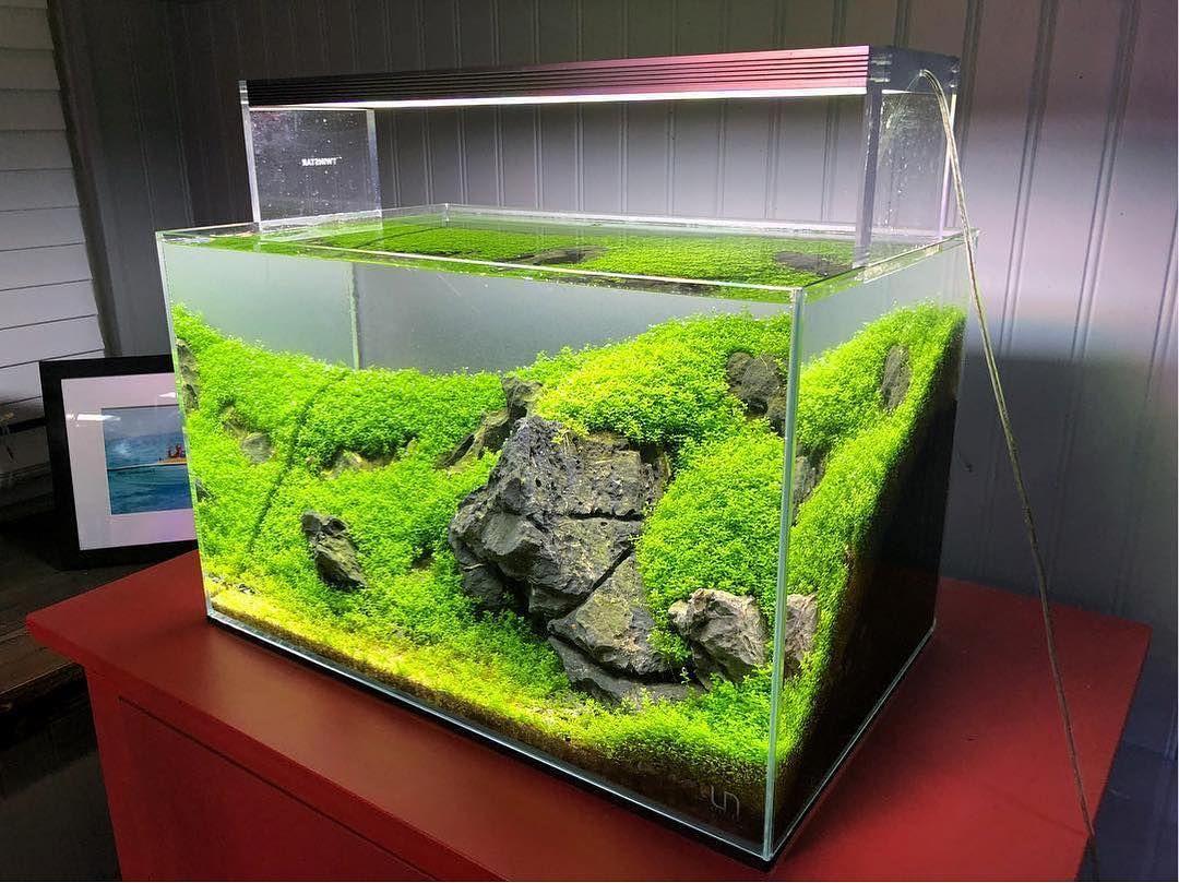 Simple Nano Planted Tank Iwagumi Style Layout Ideas For Beginner All Credit To Danny Adams On Inst Tropical Fish Tanks Planted Aquarium Aquascape Aquarium