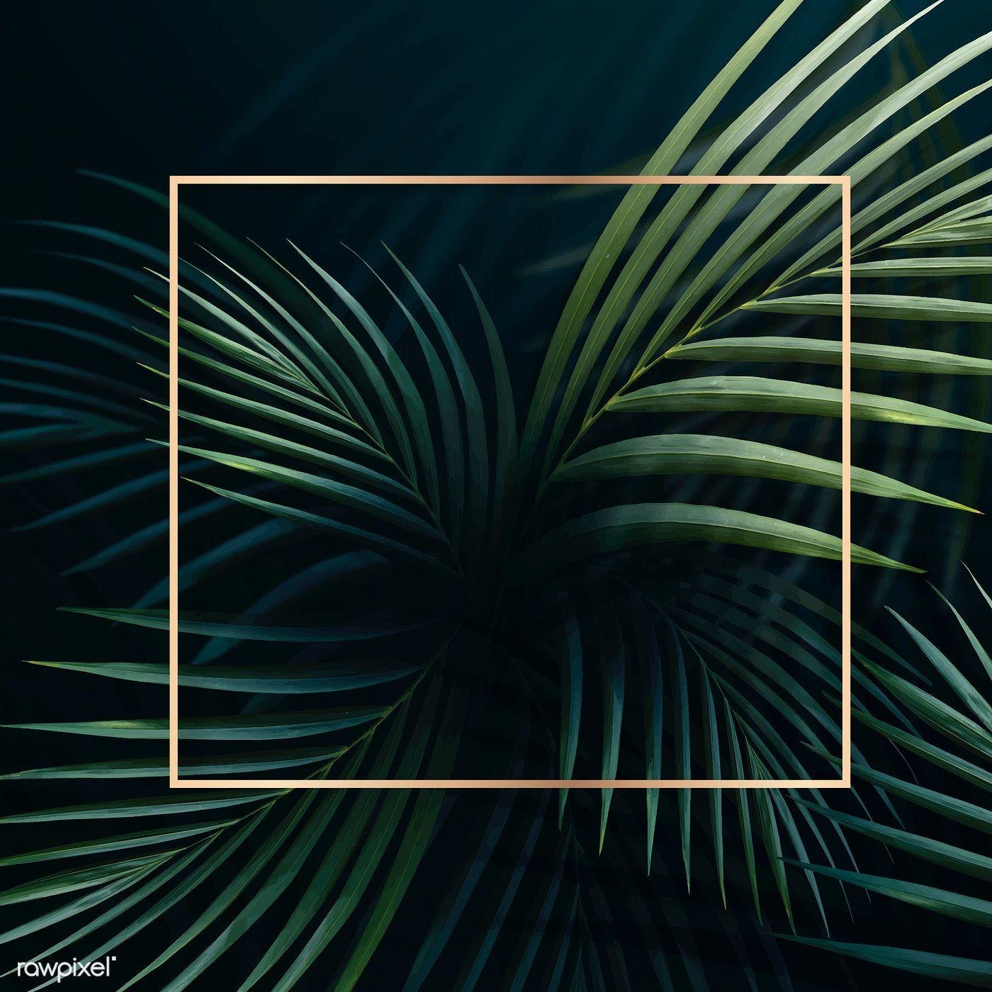 Download Premium Illustration Of Square Golden Frame On A Tropical Zelenye Fony Zhivopisnyj Logotip Fonovye Izobrazheniya