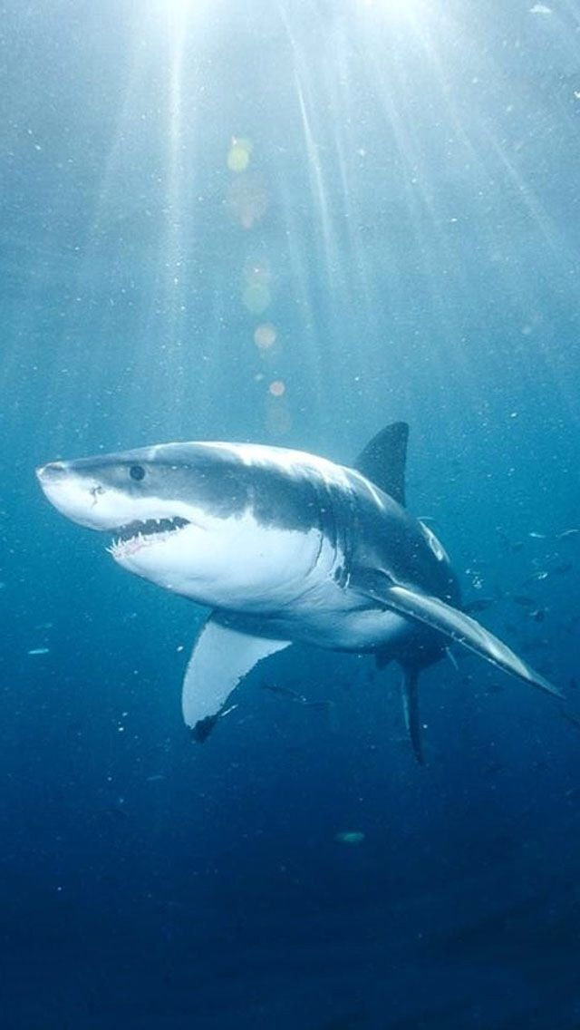 Iphone 5c Wallpaper Shark Background Shark Pictures Shark Photos