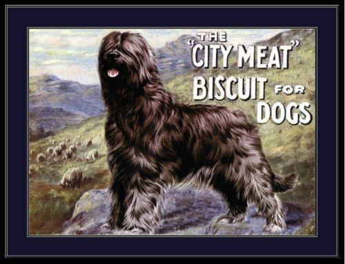 English Print Scottish Terrier Dog Dogs Biscuit Advertisement Vintage Art Poster